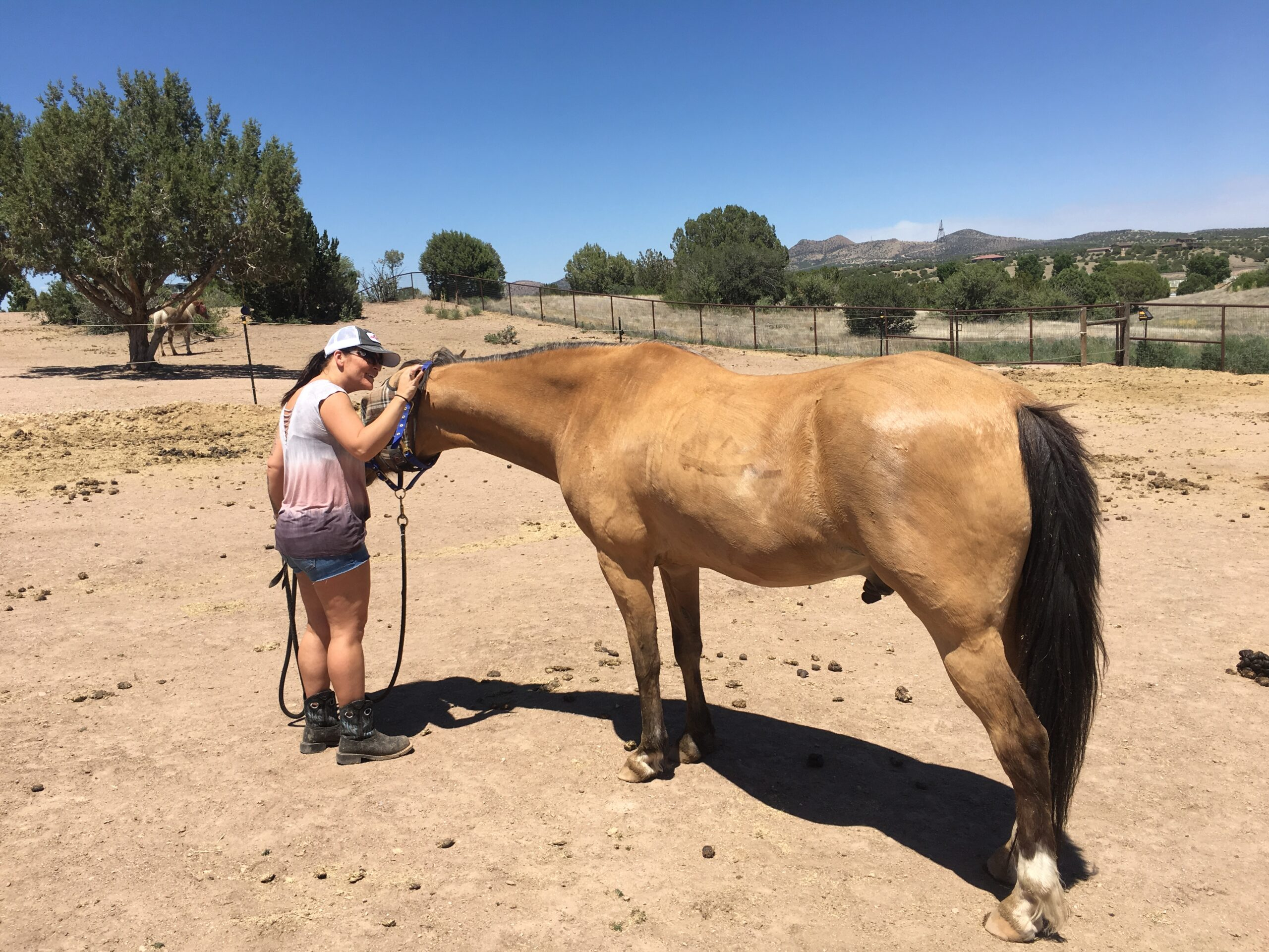 Why horses?: A different kind of therapy (Part 1 of 4)