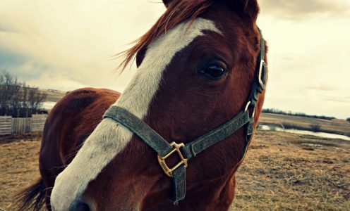 New Research on Equine Assisted Therapy